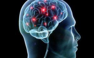 脳内ネットワーク